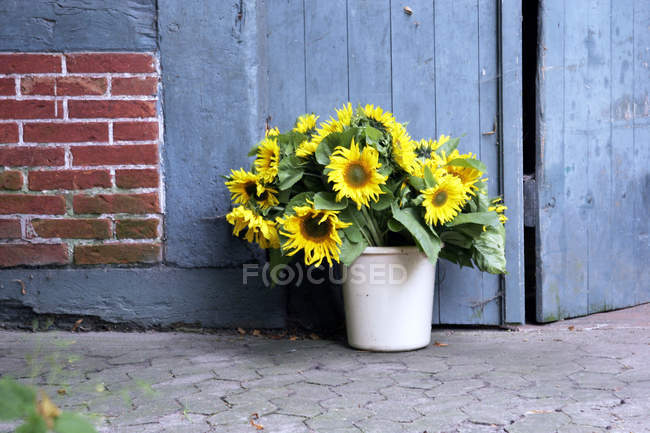 Sunflowers in white bucket at wooden house wall — Stock Photo