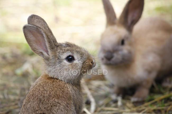 Два очаровательных пушистых кролика — стоковое фото