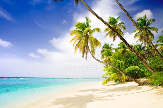 Caribbean sandy beach with palms trees and ocean water — Stock Photo