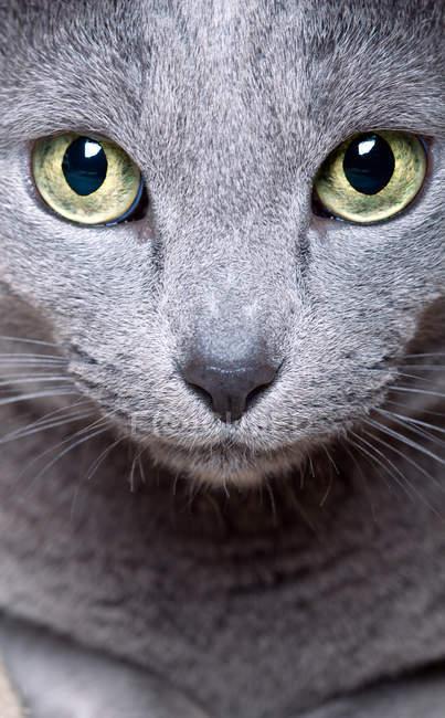 Tier-Portrait, Nahaufnahme von Katzenaugen — Stockfoto