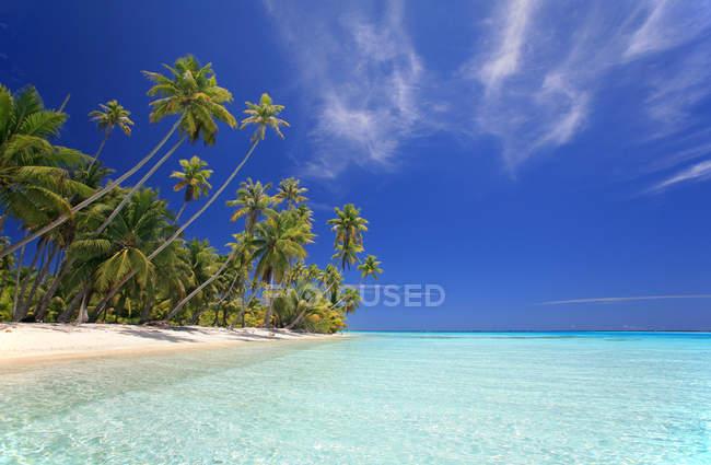 Тропические песчаный пляж с пальмами и океанской воды — стоковое фото