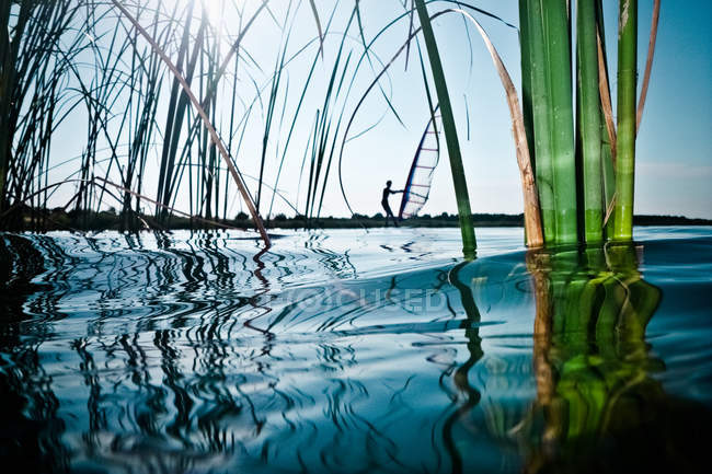 Person windsurfing in lake with reed grass — Stock Photo