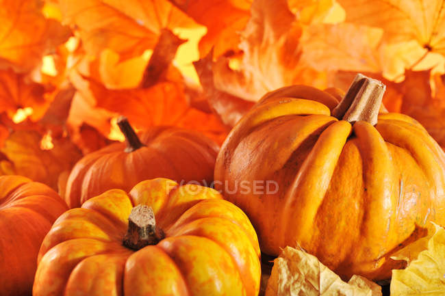 Orange Pumpkins and autumn leaves — Stock Photo