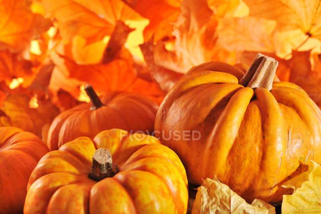 Naranja calabazas y hojas otoñales - foto de stock