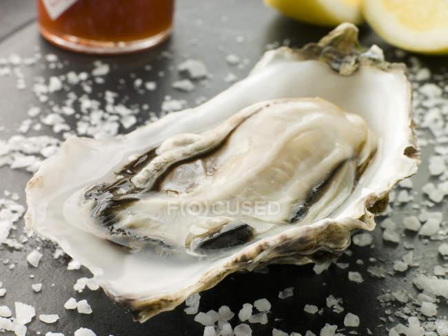 Крупним планом підготовлені устриць на стіл з морською сіллю — стокове фото