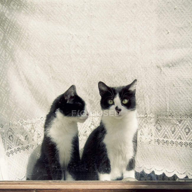 Two black and white cats sitting on window sill — Stock Photo