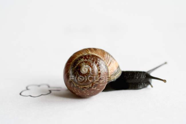 Course de l'escargot, escargot isolé sur blanc avec nuages peints Vitesse — Photo de stock
