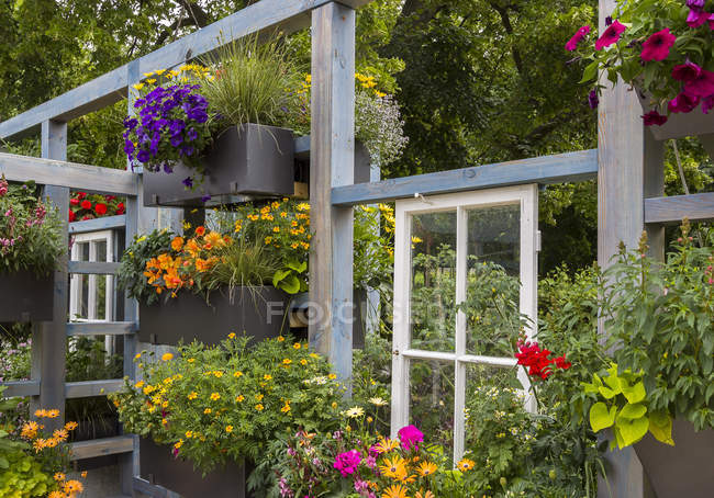 Home garden with window and many different plants and flowers — Stock Photo