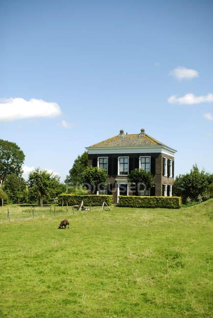 Cottage house on green valley, Edam-Volendam, Países Baixos — Fotografia de Stock