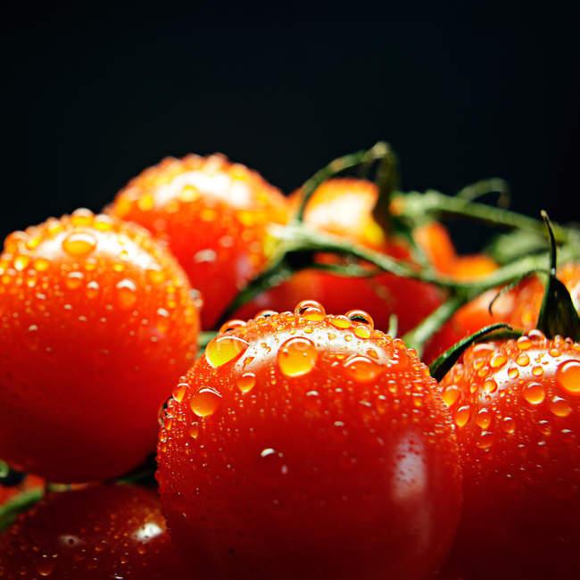 Gotas de tomate rojo fresco mojado con agua - foto de stock