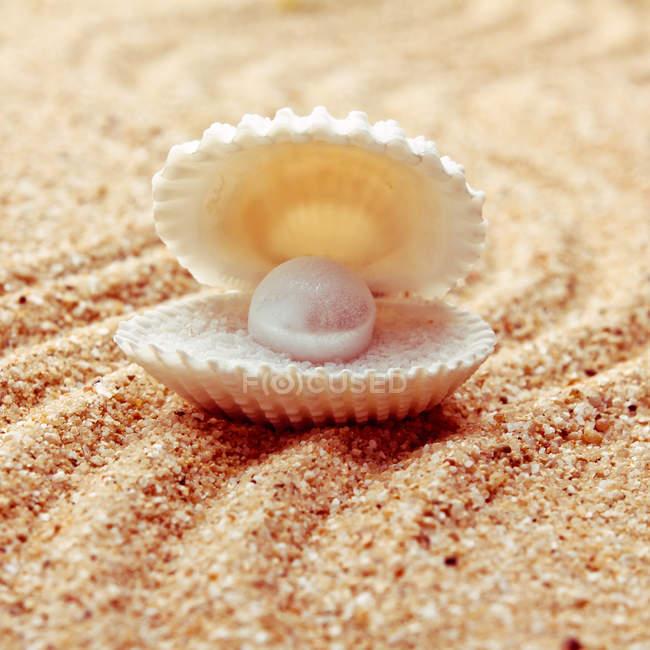Shell di cozze con perla bianca sulla spiaggia sabbiosa — Foto stock