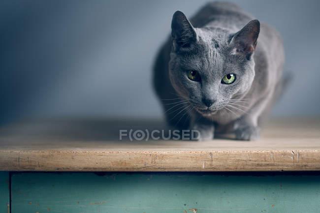 Gato sentado na mesa de madeira e olhando para a câmera — Fotografia de Stock