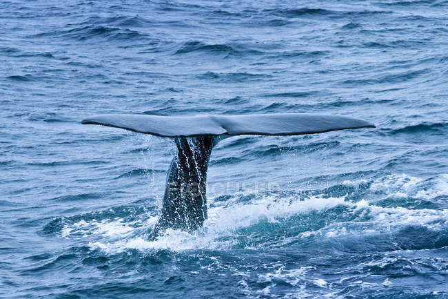 Blue water and partial view of whale tail — Stock Photo