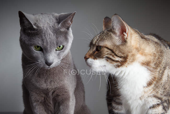 Two cats curiosity and expectation — Stock Photo