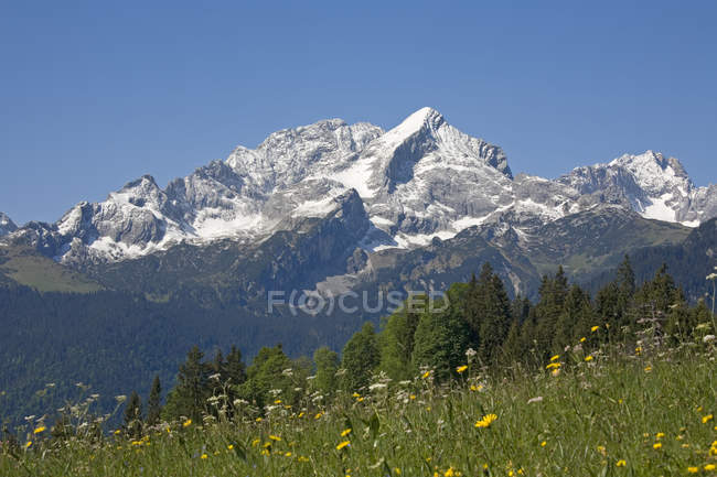Mountains with green grass meadow and field flowers, European alps — Stock Photo