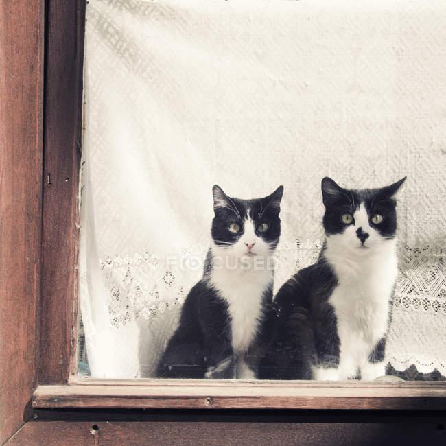 Zwei schwarz-weiße Katzen, die auf der Fensterbank sitzen und in die Kamera schauen — Stockfoto