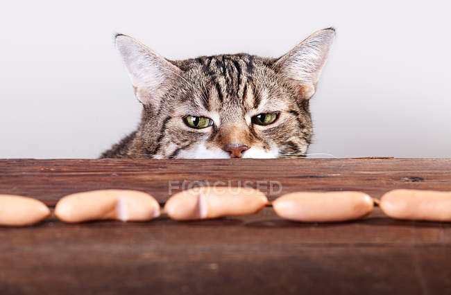 Cat temptation, cat at table looking at meat sausages — Stock Photo
