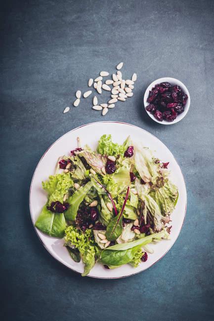 Листовой салат в пластине — стоковое фото
