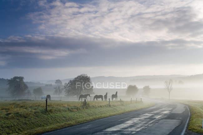 Estrada rural, com cavalos e campo — Fotografia de Stock
