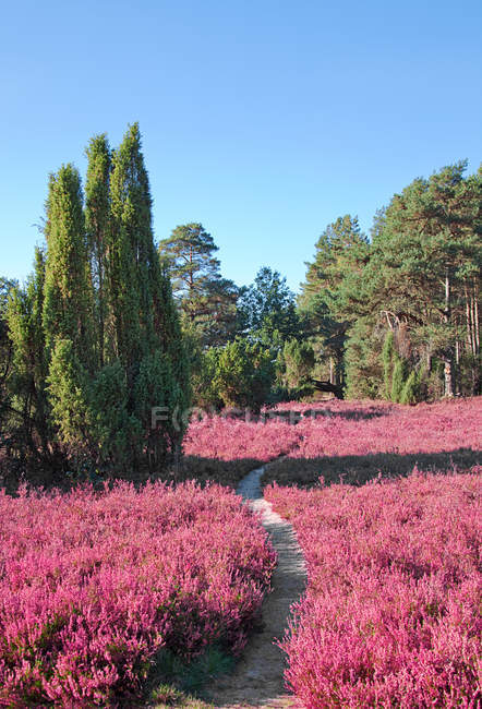 Flores de flor-de-rosa no vale de floresta — Fotografia de Stock