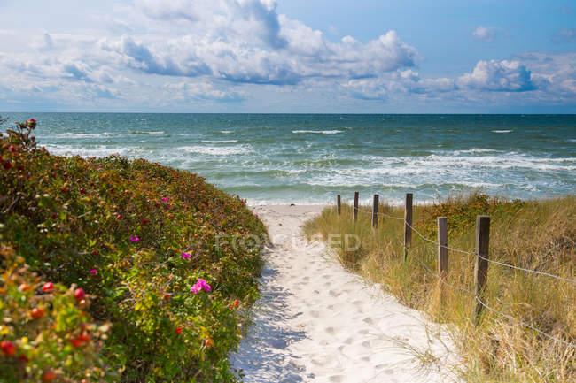 Тропинка на песчаный пляж, дюны Балтийского моря — стоковое фото