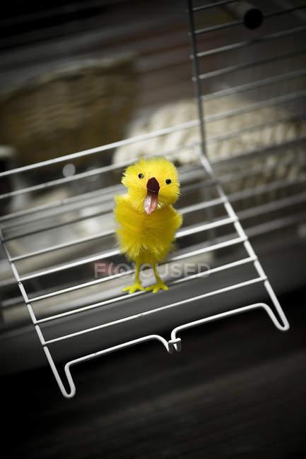 Humor e bizarro, amarelo brinquedo chick — Fotografia de Stock