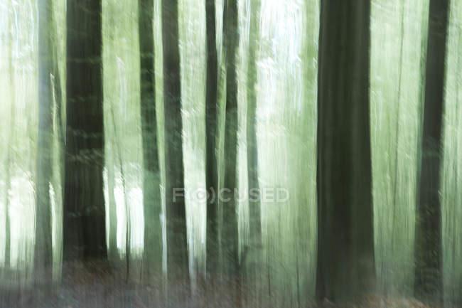 Розмита стовбурів лісу — стокове фото
