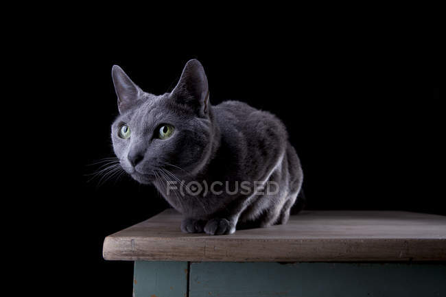 Cat sitting in dark room on wooden table and looking away — Stock Photo