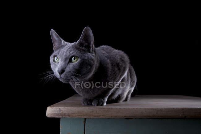 Gatto seduto in camera buia sul tavolo di legno e guardando altrove — Foto stock