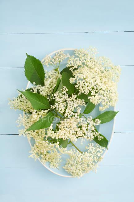 White elderflowers on blue plate — Stock Photo