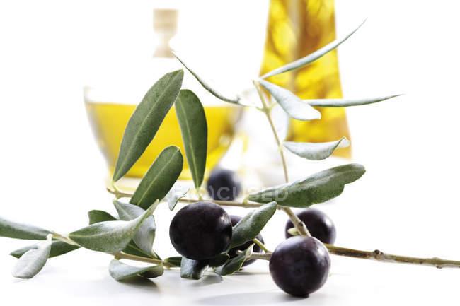 Черный оливковая ветвь с зелеными листьями и стеклянные бутылки с желтого масла на белом фоне — стоковое фото