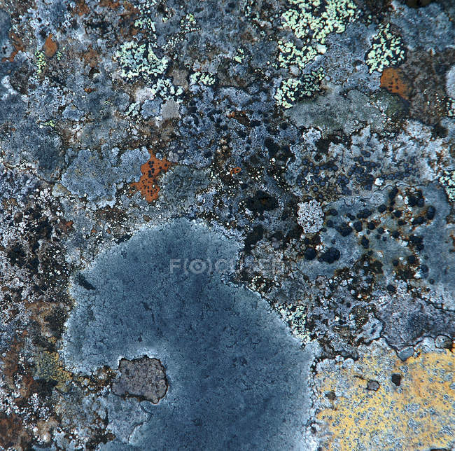 Blue stone with moss, abstract surface — Stock Photo