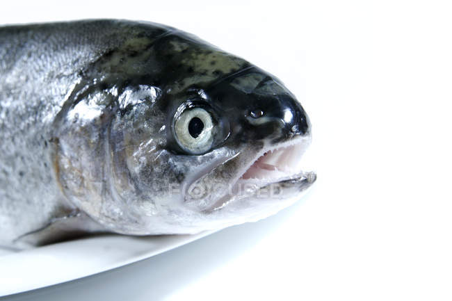 Trout fish on plate, partial view of fish head — Stock Photo