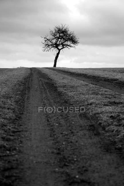Albero solitario e sentiero in campo, bianco e nero — Foto stock