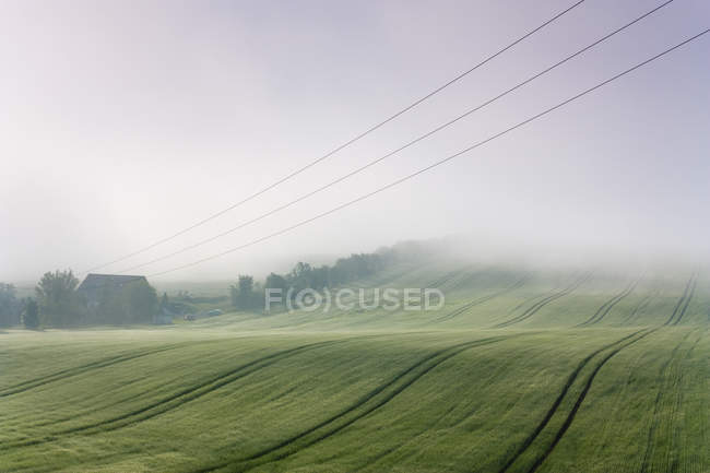 Morning landscape field in fog — Stock Photo