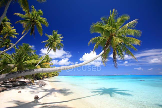 Spiaggia sabbiosa tropicale con palme e acqua dell'oceano, Polinesia, isole cook — Foto stock
