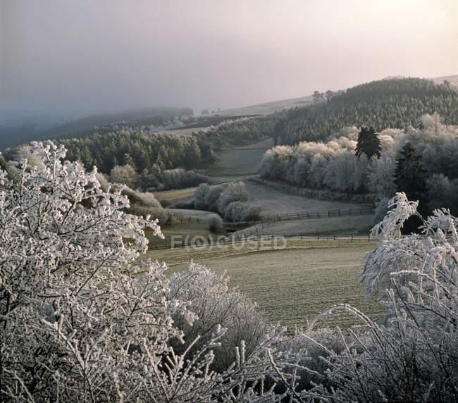 Vale coberto de neve e geada — Fotografia de Stock