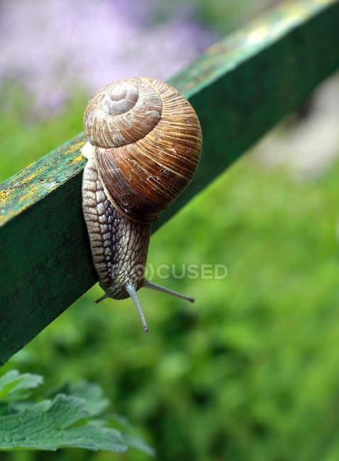 Escargot sur planche, courtisé à l'extérieur — Photo de stock