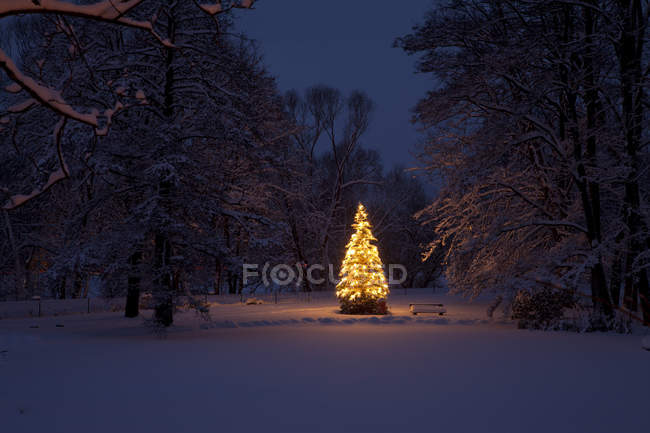 Christmas tree with illuminated lights at night — Stock Photo