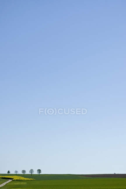 Grasgrün Landschaft mit Bäumen und klaren, blauen Himmel — Stockfoto