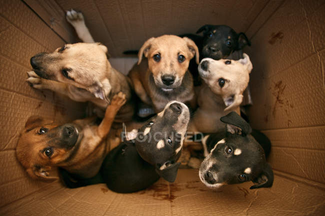 Bien-être des animaux, boîte en carton avec des petits chiots, chien chiens — Photo de stock