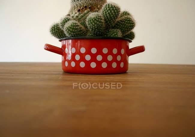 Maison cactus plantes en fer rouge pan — Photo de stock