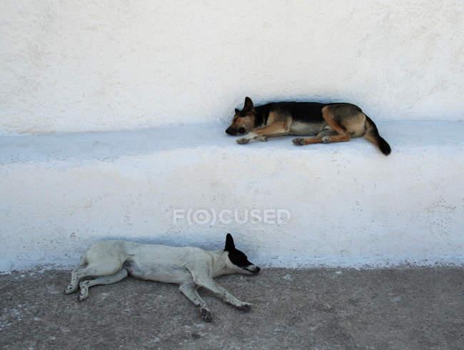 Descanso de cachorros na fachada da casa branca, na Grécia, os cães vira-lata — Fotografia de Stock