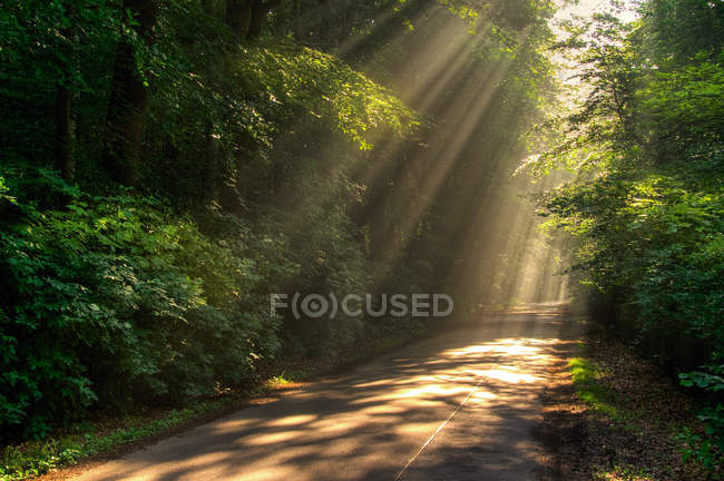 Sunbeams in green summer forest with road — стоковое фото