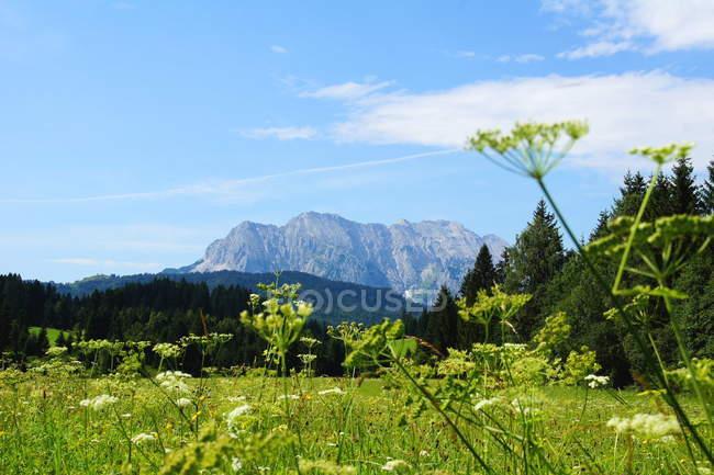 Wetterstein montagne, Northern Calestone Alpi prato — Foto stock