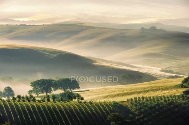 Cipressi sul paesaggio della Toscana, Italia natura — Foto stock