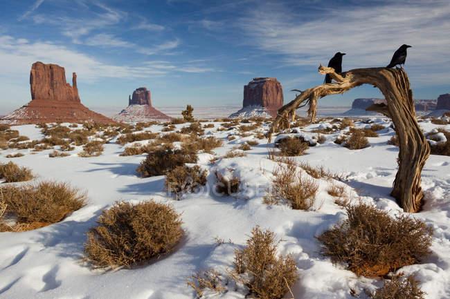 Зима в резервации Навахо нации, дерево с две вороны — стоковое фото