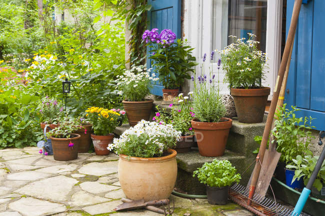 Home plants in pots at village house — Stock Photo