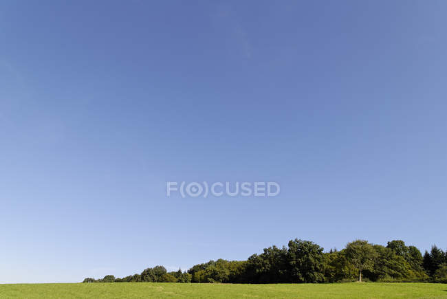 Green meadow landscape, blue sky and forest green trees — Stock Photo
