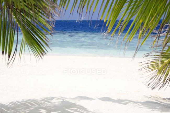 Песчаный пляж с пальмами и море — стоковое фото
